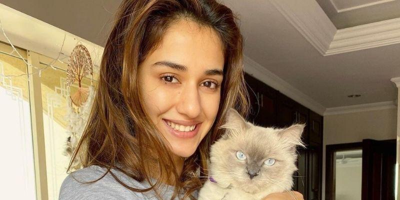 Disha Patani Most Beautiful Indian Actresses