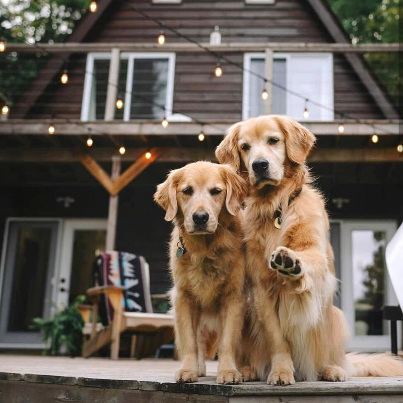 cute looking dogs in the world
