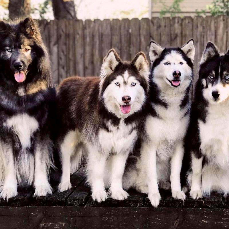 best dog breeds for pet