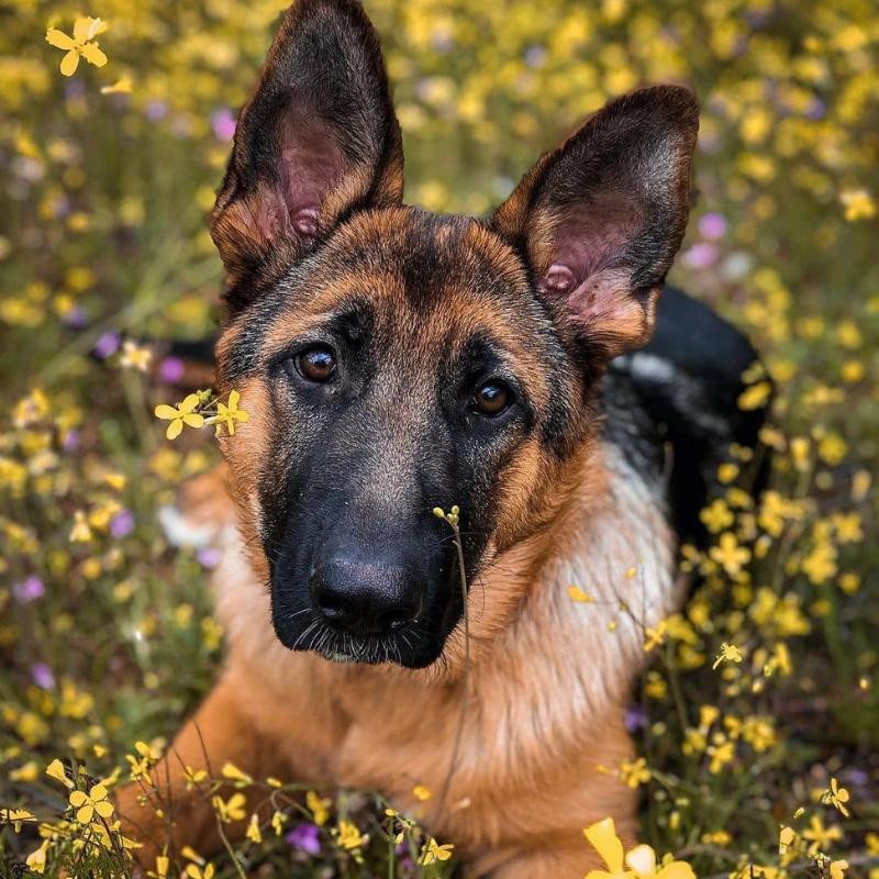 beautiful looking dogs